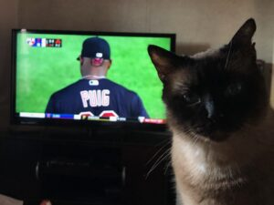 """Siamese cat with torn ears in front of the TV showing a baseball player wearing a jersey stating """"Puig."""""""